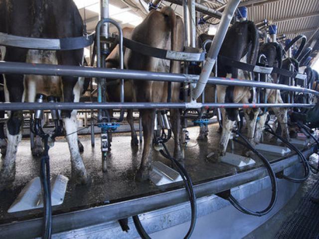 dairy_milkingshed.jpg