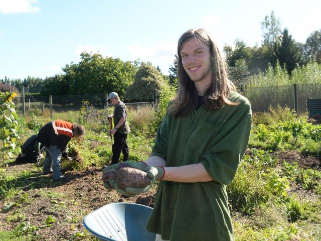 Otago Polytechnic student Luke Facer with potatoes fresh from the Kowhai Grove beds. Photo by...