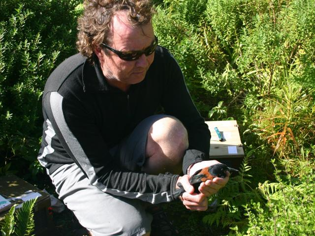 Department of Conservation biodiversity principal ranger Lindsay Wilson, of Te Anau, releases...