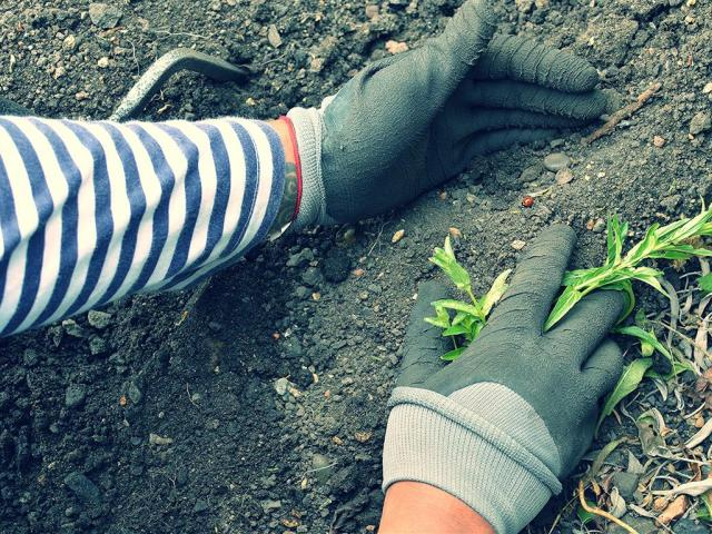 Small weeds can be left on the ground. Photo: Getty Images