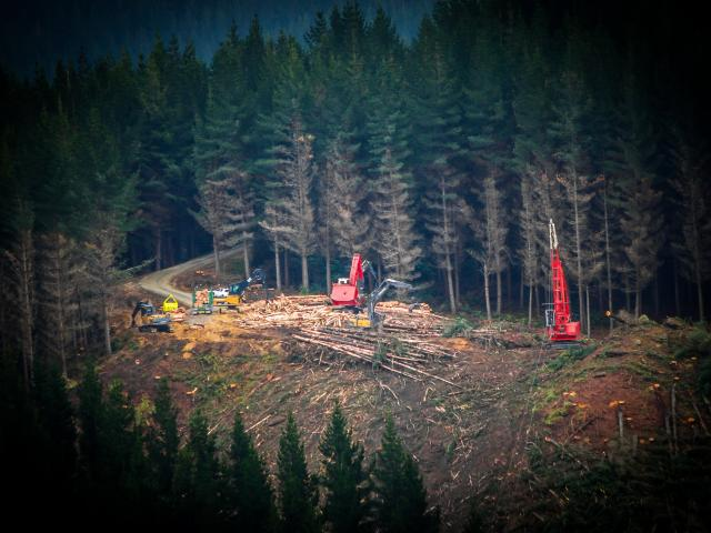 Contractors at work on DCC-owned City Forests' plantation near Dunedin. Photo: Ross Chambers