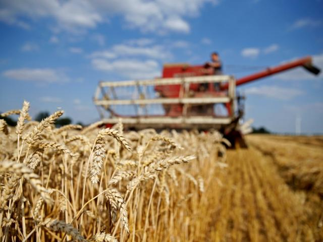 Experts say the new research will help breeders improve the nutritional value and disease...