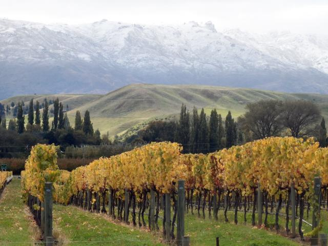 New Zealand wine exports to the US have risen by 6% in volume and 13% in value so far this year;...