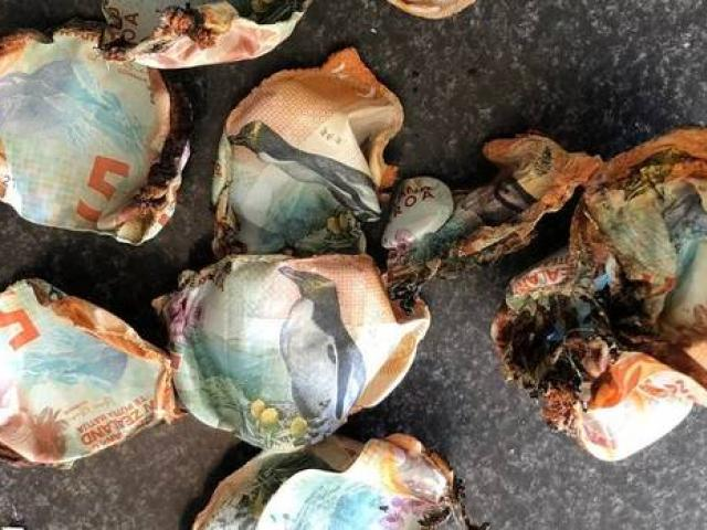 The remnants of $130 which was accidentally burned in a rubbish fire. Photo: Supplied via NZ Herald