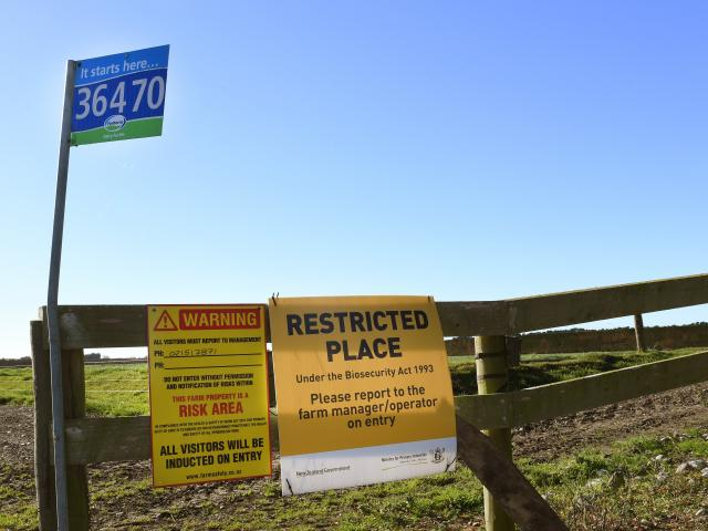 A North Otago farm under watch for M.bovis. PHOTO: STEPHEN JAQUIERY