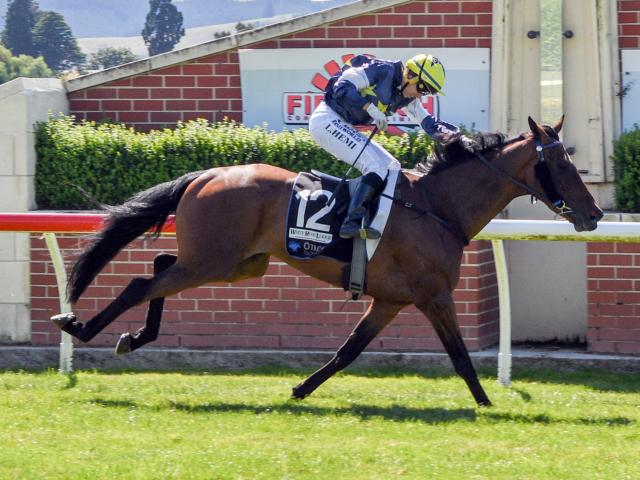 Orepuki Lad could add a third cup win to his tally today.PHOTO: WILD RANGE PHOTOGRAPHY