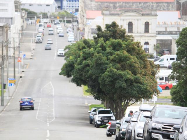The Waitaki District Council has put plans to remove nine trees at the edge of Oamaru Harbour in...