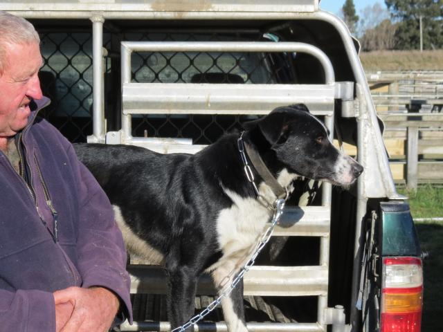 Teviot Valley farmer and dog breeder David Parker sold three-year-old Glen for $10,200 at the...