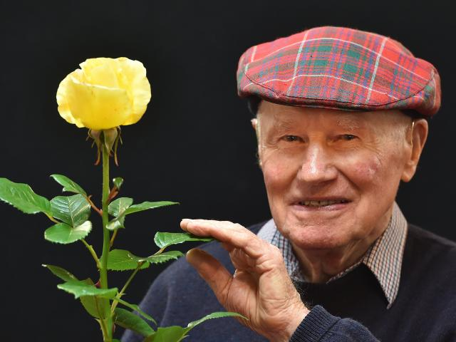 """Dunedin's Bob Grant with his """"Champion of Champions"""" rose bloom Glorious at last year's Otago..."""