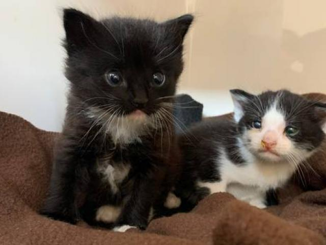 Two kittens saved from a car wreckers' yard on Wednesday. Photo: Supplied