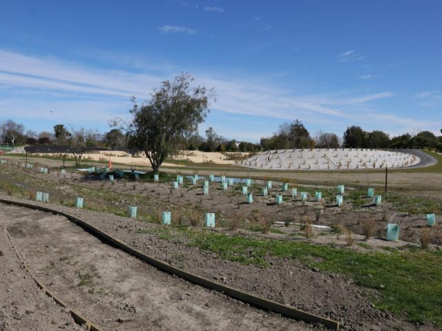 Planting under way at the Honda Forest which is part of the Kaiapoi red zone.