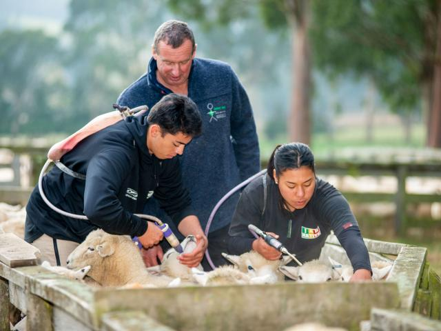 Students Redginald Reihana and Mihiora Waipouri drenching under the guidence of tutor Allan Roxbuugh