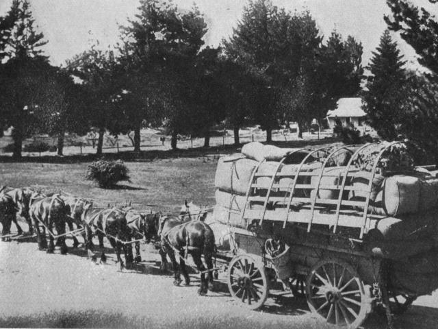 A large load of wool from Glen Dhu station, passing through Pembroke, Lake Wanaka, on the way to...