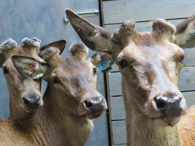 Solid deer sales throughout the country, including two in Southland, means the industry is in '...