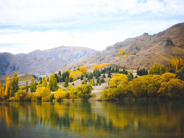 Deciduous trees put on a show at Lake Aviemore last April. PHOTO: REBECCA RYAN