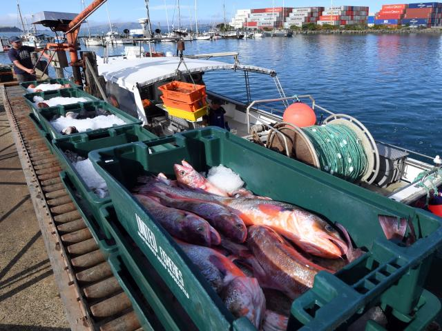 Leighton Kirk, an independent contractor who lands his fish to Harbour Fish, unloads fish at...