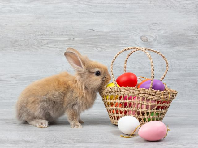PM Says Easter Bunny Is an 'Essential Worker'