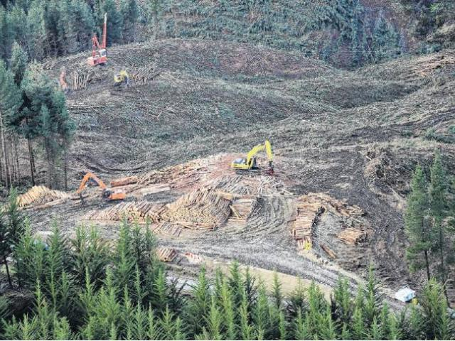 Businesses involved in the forestry sector are critical of the proposed Forests (Regulation of...