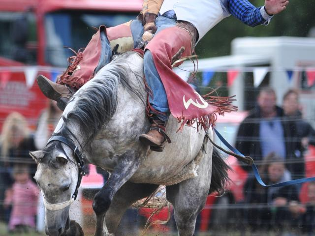 Former bareback rider Adam Williams, of Rakaia, in action at the Outram Rodeo 