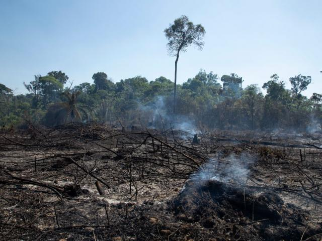 Brazil had the most deforestation, accounting for 61% of the hotspots in the Amazon overall....