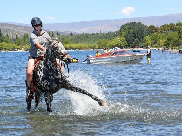 Riding Micah in Lake Dunstan is Jess Murphy, of Waikouaiti.PHOTO: STEPHEN JAQUIERY