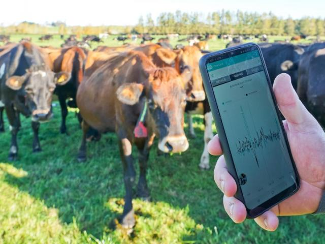 Allflex data goes straight to your mobile phone