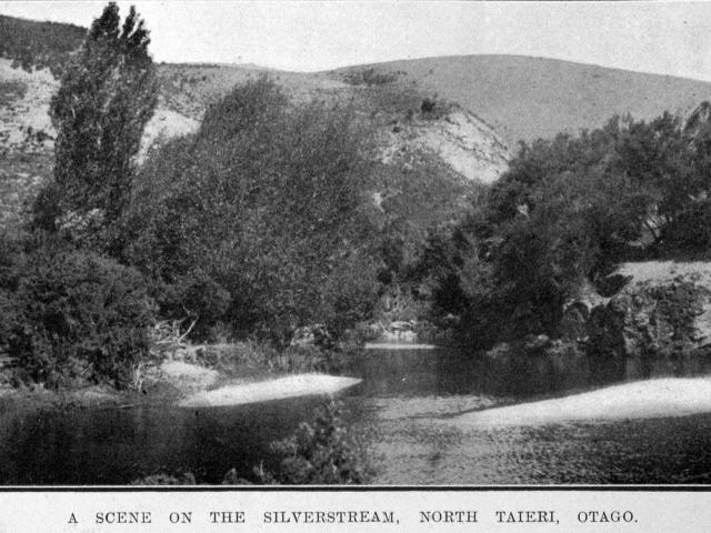 Branches from willow trees like these clogged the Silver Stream, North Taieri. — Otago Witness,...