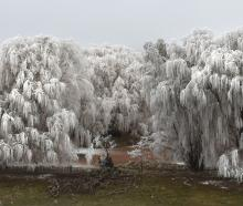 Hoar frost covers willows surrounding a duck pond near  Omakau.