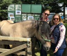 Sisters-in-law Brittany Hall (left), of Geraldine, and Rebecca Hall, of Rangiora, make a new friend in Finnglenny of Hillcrest, from the Hillcrest Highland Pony Stud of Amberley. The stud is one of only two Highland pony studs in New Zealand.