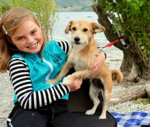 Mia Elsie Sutherland (7) plays with her dog Suki at Lake Wanaka. Photo: Robyn Sutherland