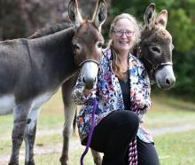 Judy Weild, of Milton, with her donkeys, Awapuni Mirabelle and Cherrybank Jax. Photos: Peter McIntosh