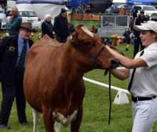 Lorna Button (20), of Kaka Point, has her Holstein Friesian yearling heifer judged by Peter...