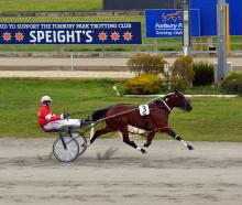 Captain Dolmio is a picture of pacing perfection as he sprints clear to win the Tuapeka Cup at...