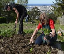 Connor Vickery and Sheryl Chittock get stuck in at the new community garden in Dalmore Reserve....