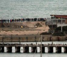 A crowd of about 100 people gathered on the breakwater in January for a sneak peak of little blue...