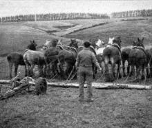 Plenty of horsepower goes into drain ploughing on Mr D. Murray's ``Kildrummie'' farm, Clydevale. ...
