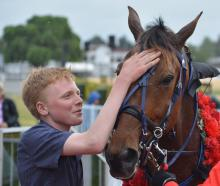 Greg and Nina Hope's son Ben pats Monbet after the gelding's win in the Dominion Handicap last...