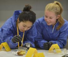ear 13 pupil Sarah Lee (left), of Wellington, applies ink to find a fingerprint and Olivia Fox,...