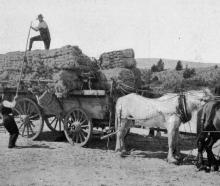 Loading flax at Pembroke: making the load secure for a long waggon journey. - Otago Witness, 6.3...
