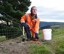 Otago Regional Council environmental officer for biosecurity Kirk Robertson lays chopped carrots...