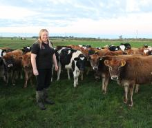 Dairy Women's Network southern regional leader Shelli Mears checks on her rising one calves at...