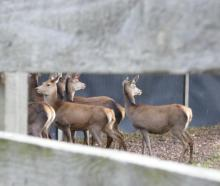 The deer industry, along with dairy, beef and sheep, has welcomed the new animal welfare...