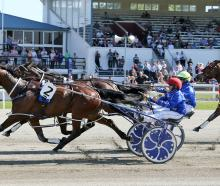 Eamon Maguire, driven by Natalie Rasmussen, sprints to the finish in the Ashburton Flying Stakes...