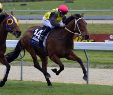 The Precious One will contest the South Island Thoroughbred Breeders' Stakes at Riccarton Park...