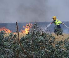 A volunteer fire fighter goes up against flames while fighting a grass fire in the Queenstown Lakes District in January this year. Photo: Tracey Roxburgh