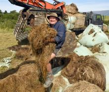 Nursery owner Rodney Hogg has been collecting baleage swept up in November's flood from the road...