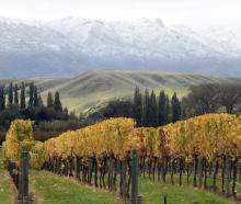 A new industry report says there are big opportunities for exporting wineries in New Zealand;...