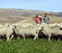Jayne Rive, George Reed and Matilda Reed (3) at Cloudy Peak on an irrigated paddock compared to...