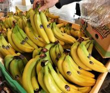 Bananas might one day be a staple crop for New Zealand. Photo: RNZ