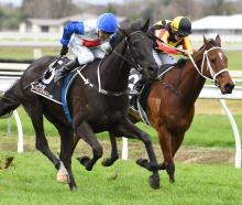 King Cougar (rails), pictured here running a close second to Herengawe at Awapuni on July 7, has...